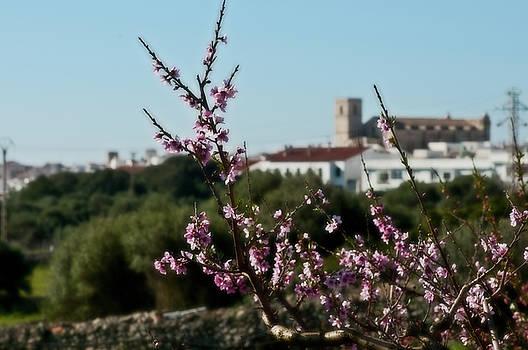Pedro Cardona Llambias - Almond tree 1