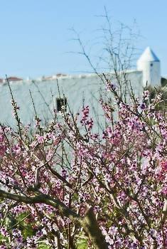 Pedro Cardona Llambias - Almond tree and mill