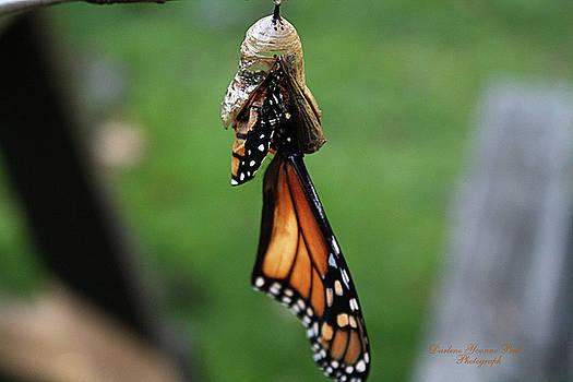 Darlene Bell - Almost A Butterfly