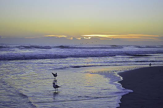 Almost sunrise by Julianne Felton