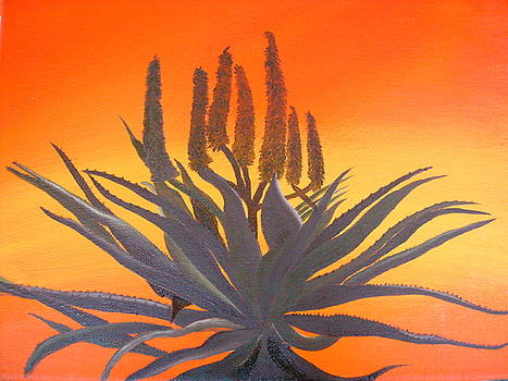 Aloe Sunset by Dion Halliday