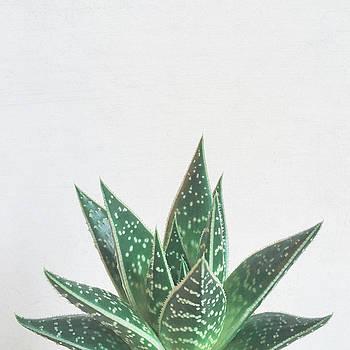 Aloe Tiki by Cassia Beck