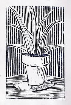 Aloe vera by Daniel Ribeiro