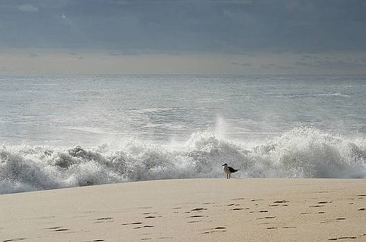 Alone - Jersey Shore by Angie Tirado