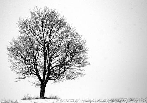 Alone by Doug Hockman Photography