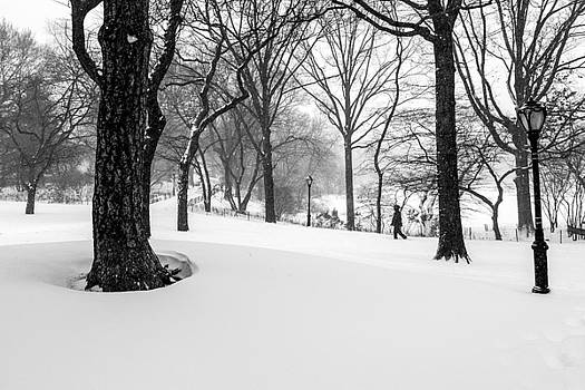 Alone in a White World by Cornelis Verwaal