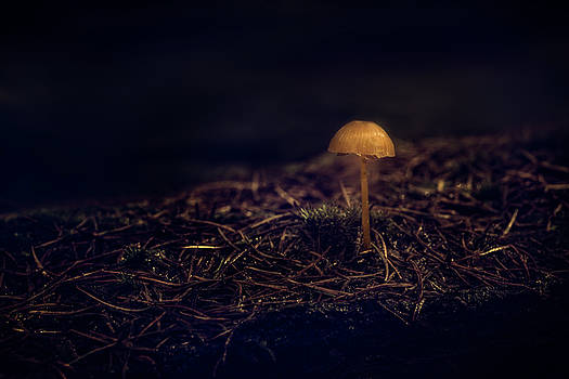 Alone in the Dark by Tim Abeln