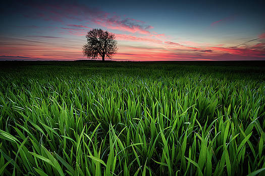 Alone in the field by Evgeni Ivanov