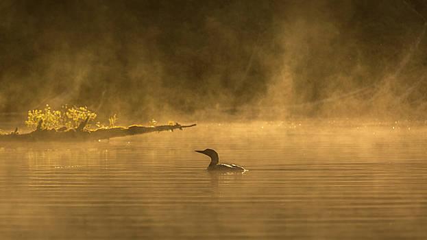Alone in the morning fog by Yves Keroack