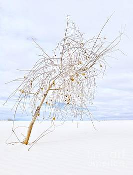 Alone in White Sands by Glennis Siverson