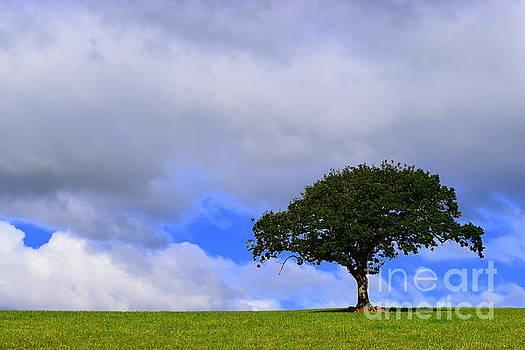Joe Cashin - Alone on a hill