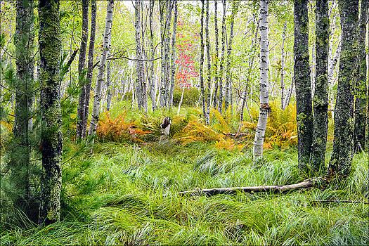 Along The Jesup Path by Michael Bufis