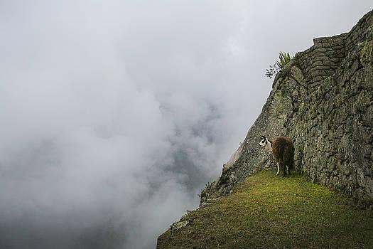 Alpaca on the Edge by Jed Holtzman