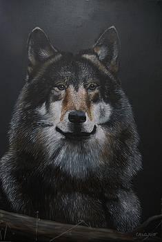 Alpha by Jean Yves Crispo
