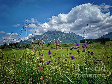 Alpine Beauty by Edmund Nagele