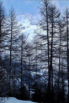 Alps and Tall Pine Trees by August Timmermans