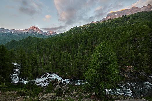 Jon Glaser - Alps Forest