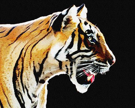 Manjot Singh Sachdeva - Always Alert - Tiger