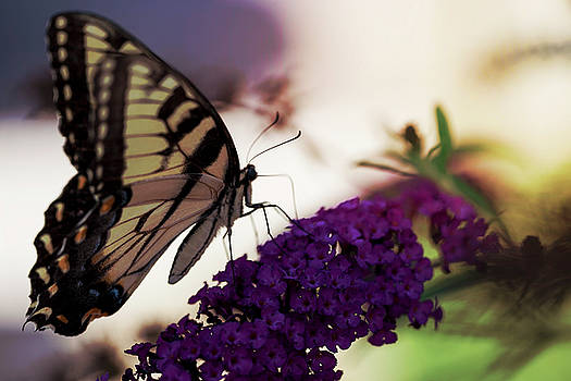Always Butterflies 1 by Christina Durity
