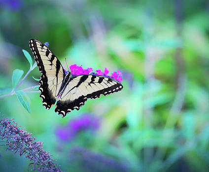 Always Butterflies 2 by Christina Durity