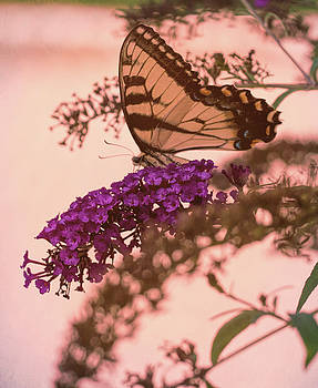 Always Butterflies 3 by Christina Durity