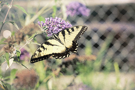 Always Butterflies 4 by Christina Durity