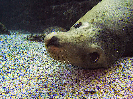 Matt Swinden - Am I cute? asks the sea lion