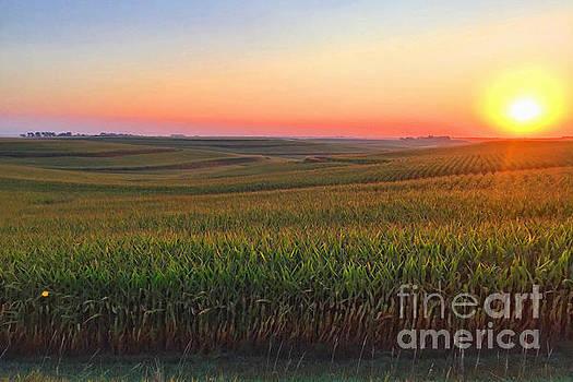 A'maizing' Iowa Morn by Stephen Schwiesow
