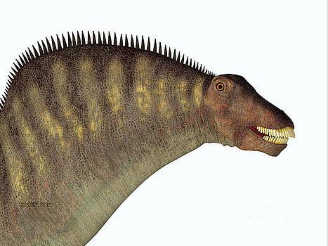 Amargasaurus Dinosaur Head by Corey Ford