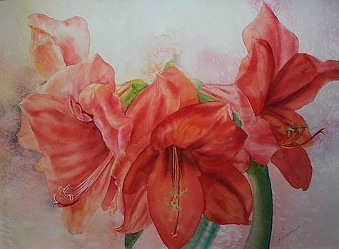 Amarylis by Ruth Kamenev
