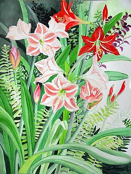 Amaryllis and Hippeastrum by Vishwajyoti Mohrhoff
