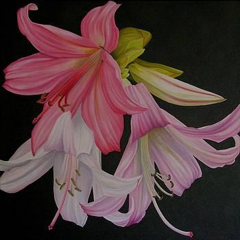 Amaryllis Bella donna by Pera  Schillings