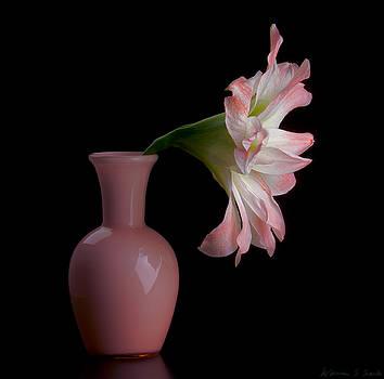 Warren Sarle - Amaryllis in Vase  8768