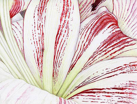 Amaryllis by Tammie Painter