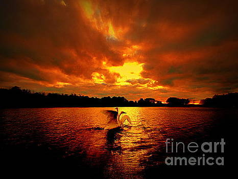 Amazing Grace Swans Sunset Eternity by Jack Martin