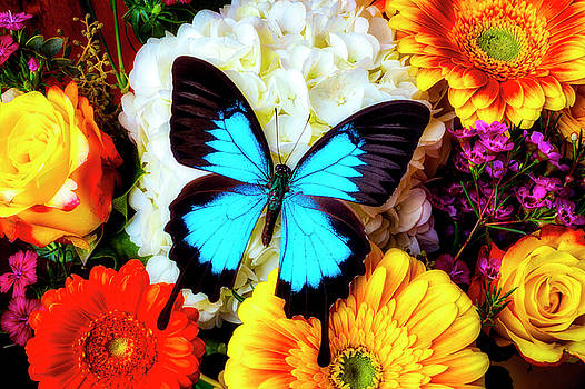 Amazing Large Blue Butterfly by Garry Gay