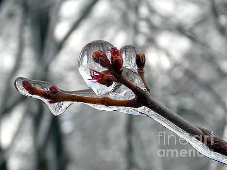 Amazing Nature by Irfan Gillani