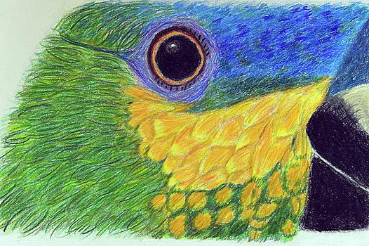 Amazon Parrot Portrait by Lisa Von Biela