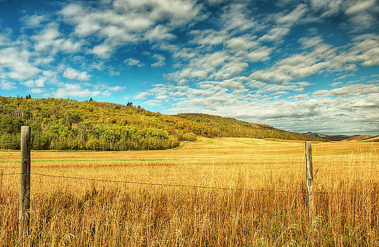 Amber Waves of Grain by Donna Caplinger