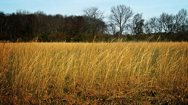 Amber Waves of Grain by George Taylor