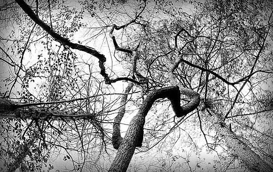 Amble  by Shayne Johnson Fleming