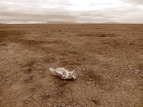 Amboseli Lake by David Olson