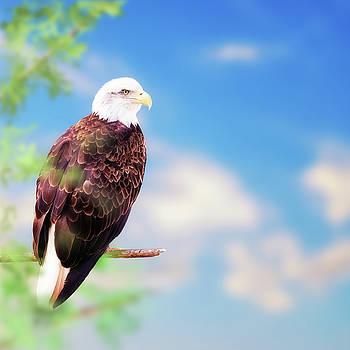 Susan Schmitz - American Bald Eagle Perched on Tree