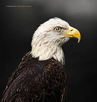 American Bald Eagle by Sunman Studios
