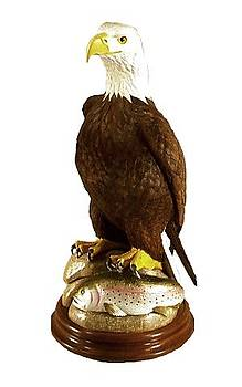 American Bald Eagle with Rainbow Trout by Peter Vaice