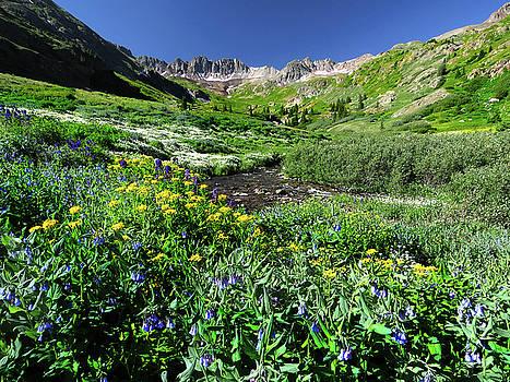 American Basin wildflowers by Carol Milisen