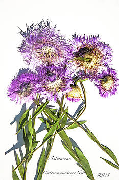 American Basket Flower by Roberta Jean Smith