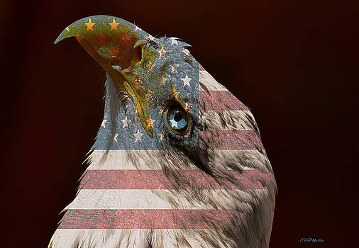 American Beauty by Ericamaxine Price
