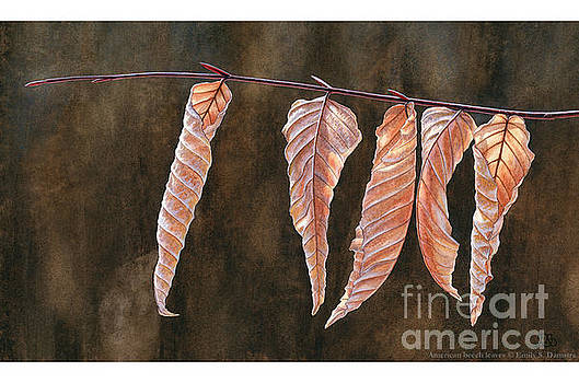 American beech leaves by Emily Damstra