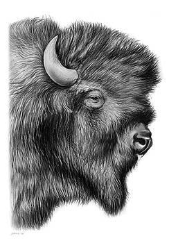 Greg Joens - American Bison